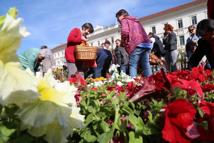virágvásár, hl01
