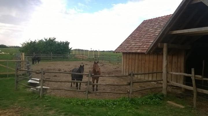 Áta_lovak