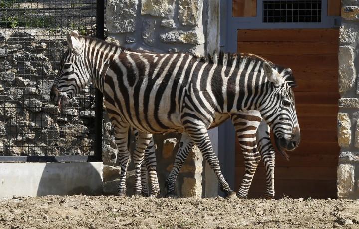állatkert, hl01