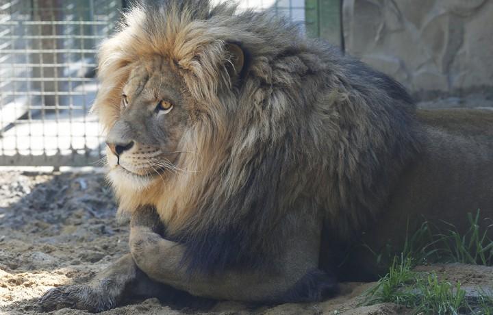 állatkert, hl14
