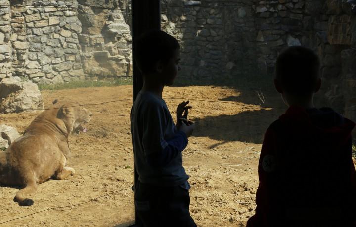 állatkert, hl15