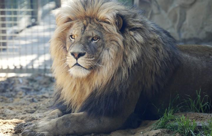 állatkert, hl18