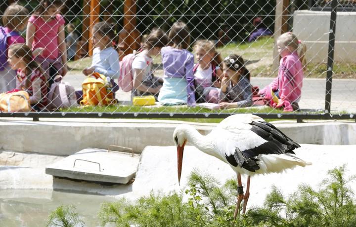 állatkert, hl28