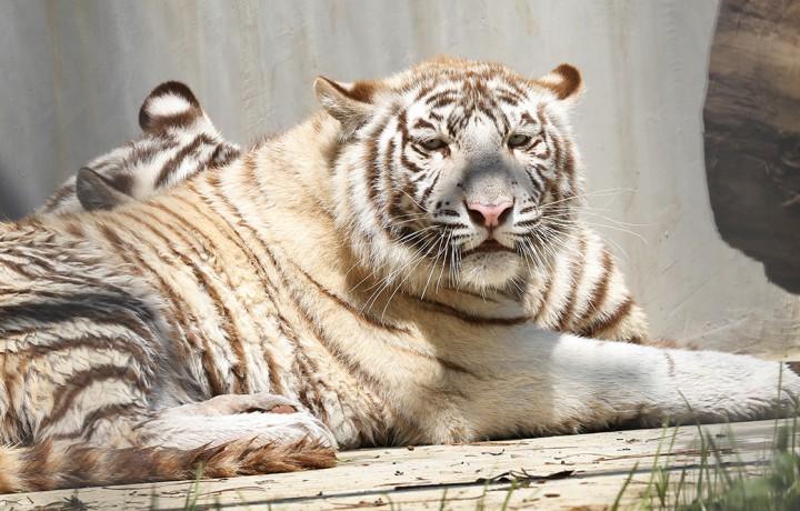állatkert, hl32