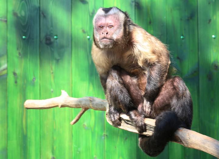 állatkert, máté03