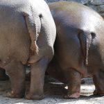 Felrobbant az állatkerti cukiságbomba