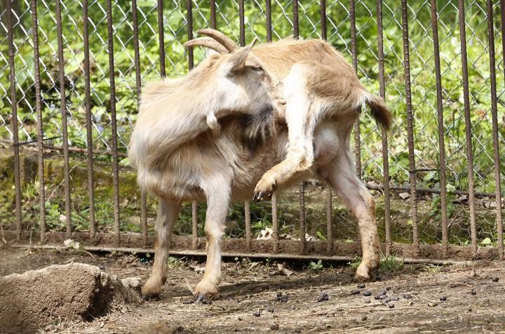 állatkert, máté08