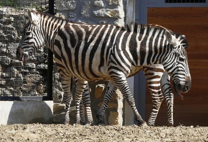 állatkert, máté09