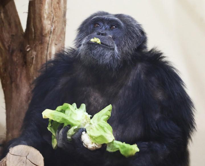 állatkert, máté13
