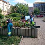 Annyira sok a virág Pécsen, hogy győzzük számolni