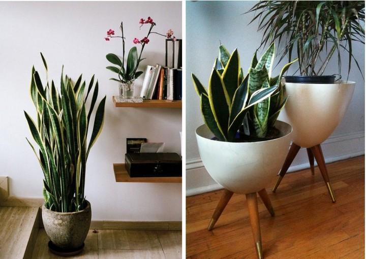 lakásdekor_növény