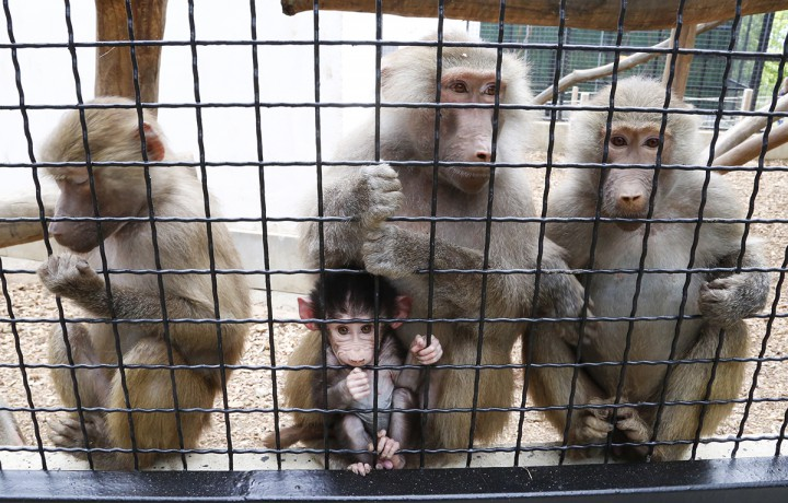 zoo, hl18
