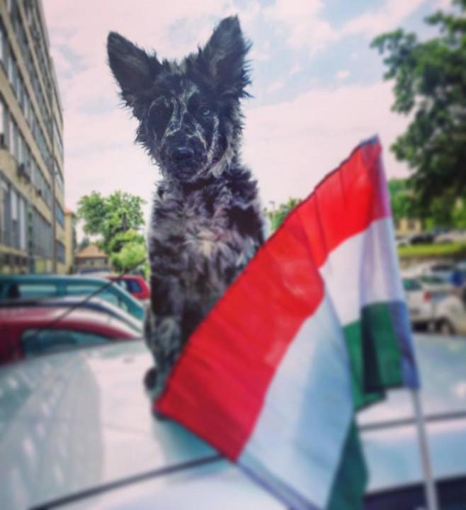 magyarfanok_kutya