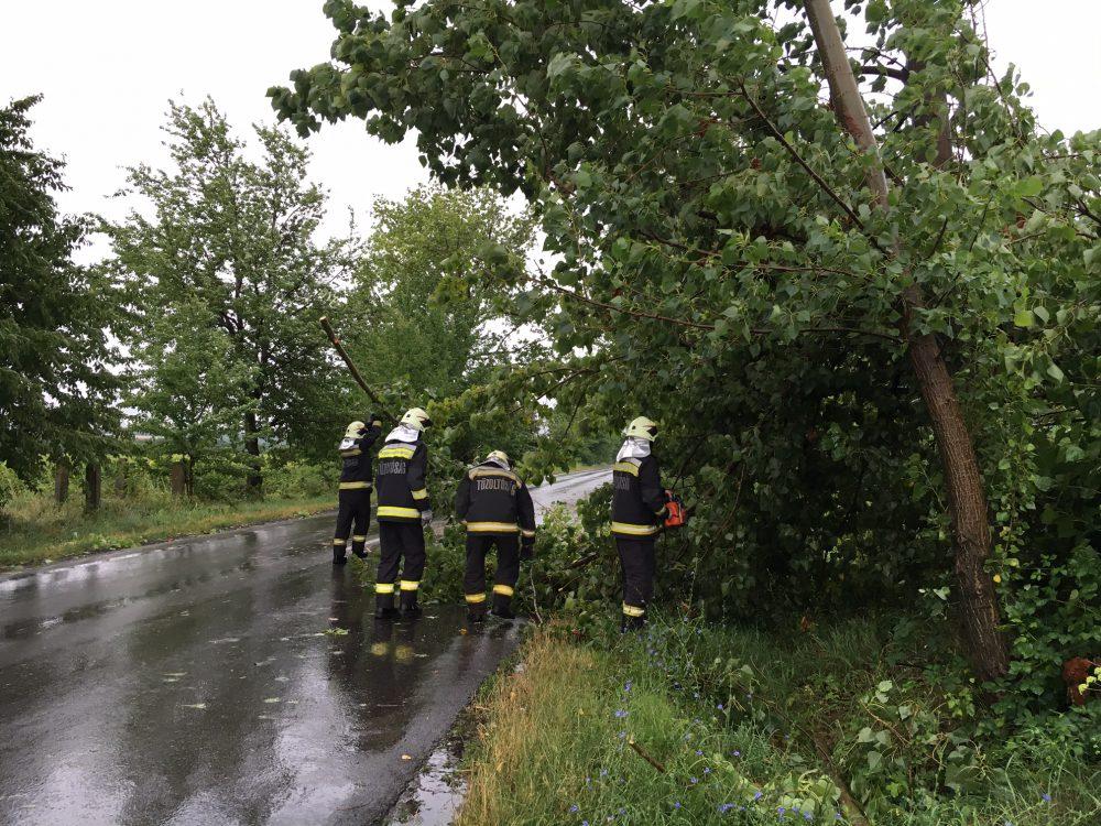 Veszélyesen lógtak az utak felé a fák