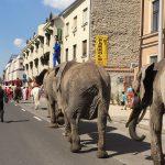 Így trappoltak végig az elefántok Pécsen