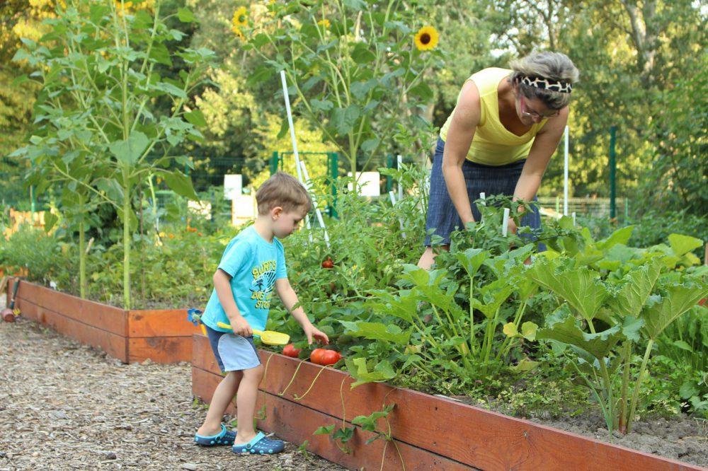 Egy pillanatkép egy működő közösségi kertből
