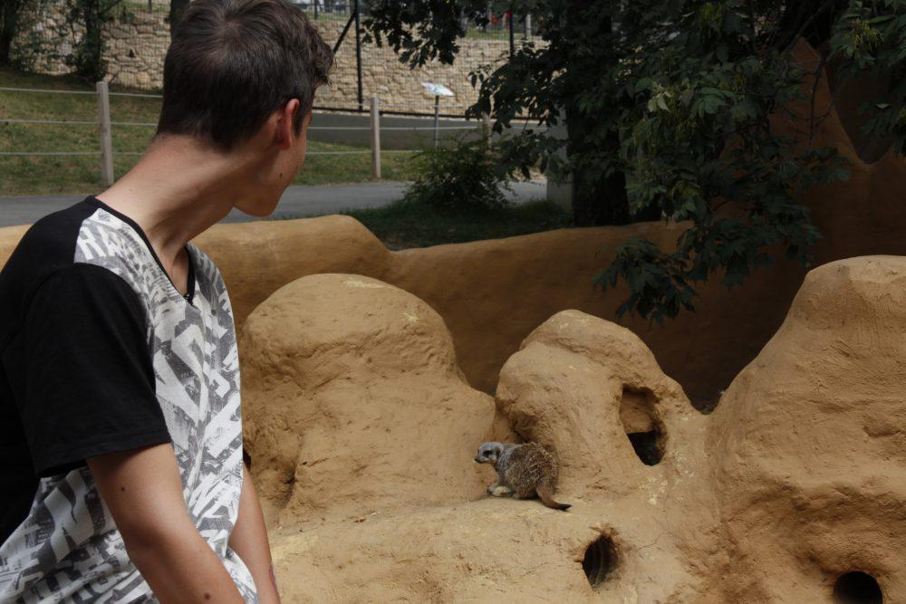 A szurikátákat Beni nagyon bírta