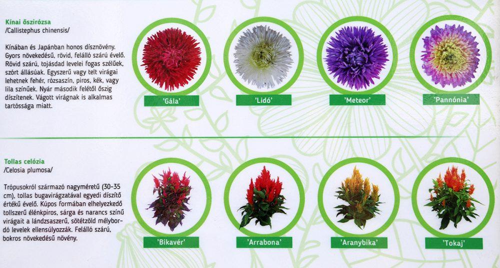 Az informatív táblán bemutatják Kováts virágait is