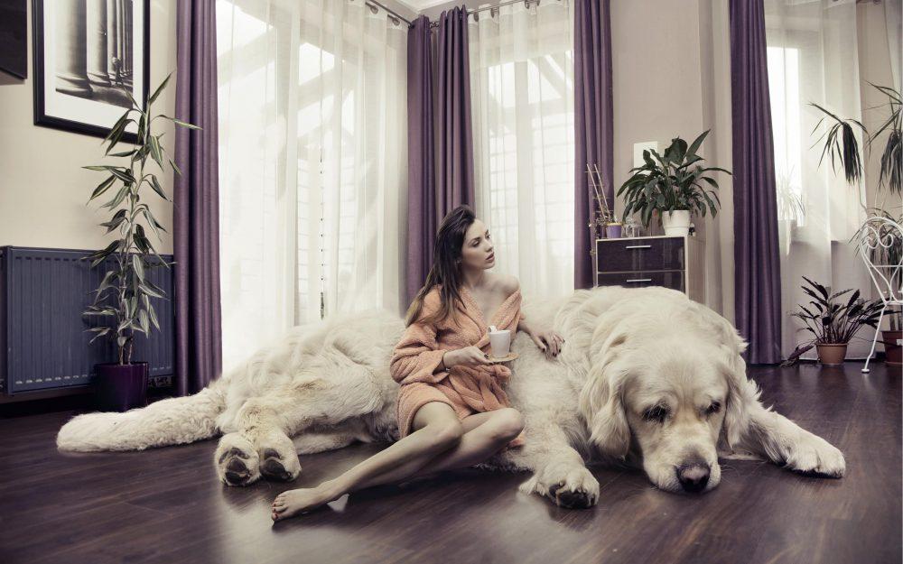 A kutya mérete most már elvileg nem számít.