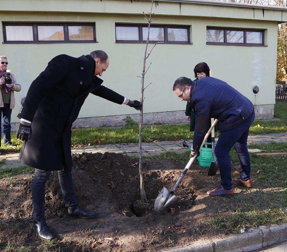 Egy kivágott fa helyére három újat ültetett Csizi Péter