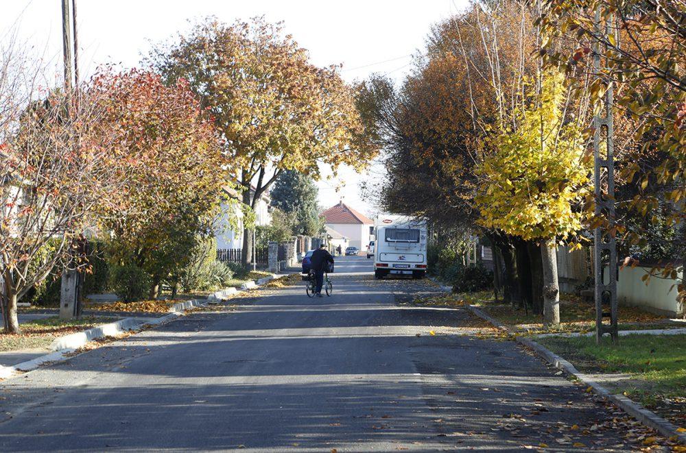 Vigyáztak a környék fáira