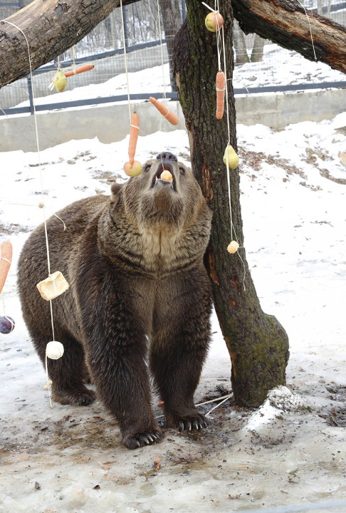medve, árnyék, hl01