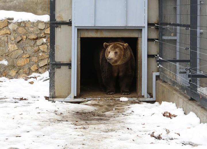 medve, árnyék, hl04