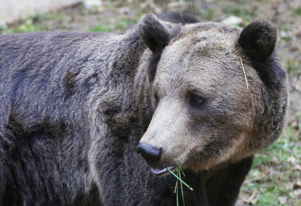 medve, hl02