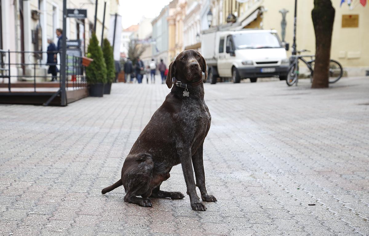 kutya a belvárosban, bono, hl01