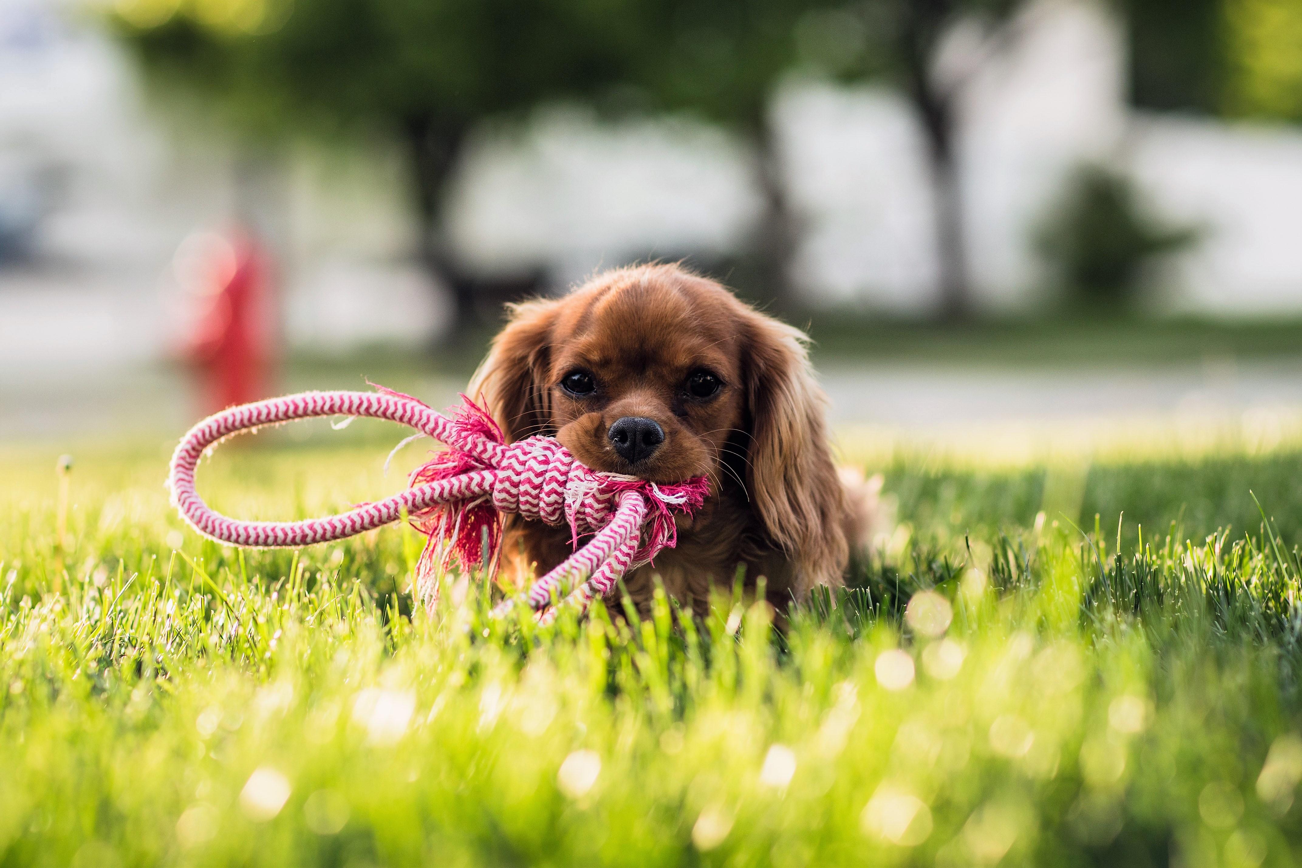 kutya3