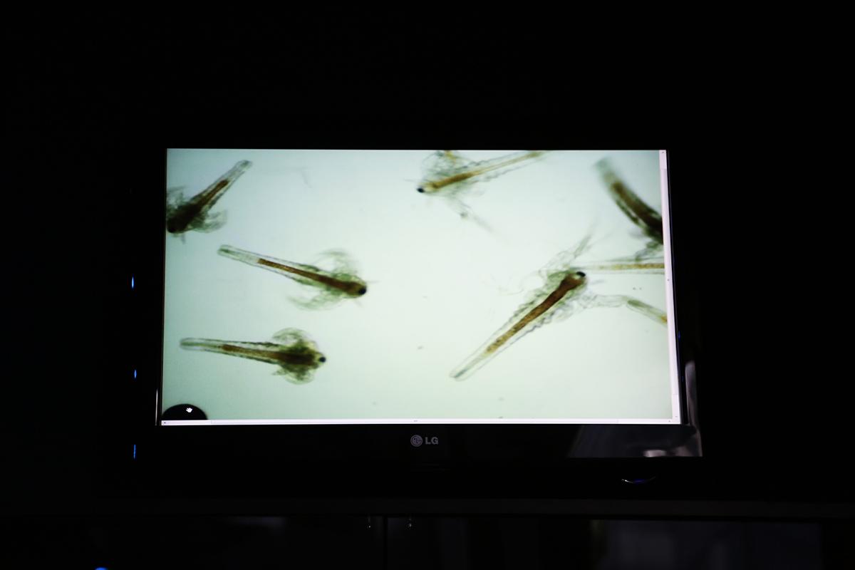 Egy képernyőn láthatjuk, hogy mozognak a sórákok