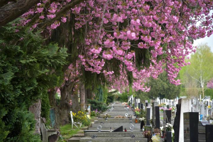 A sírhelyek fölé is kinyúlnak a fák ágai