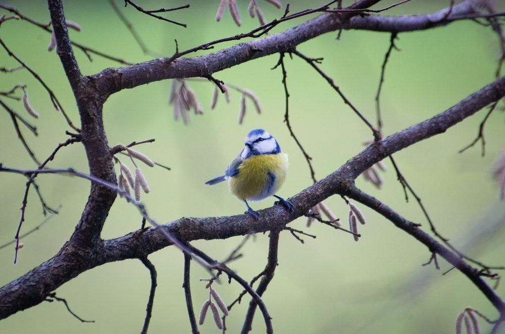 5G teszt madarak