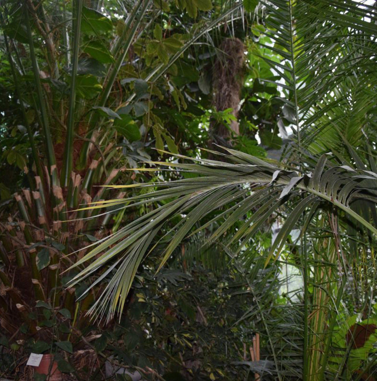 Botanikus Kert, Dísznövény Kiállítás